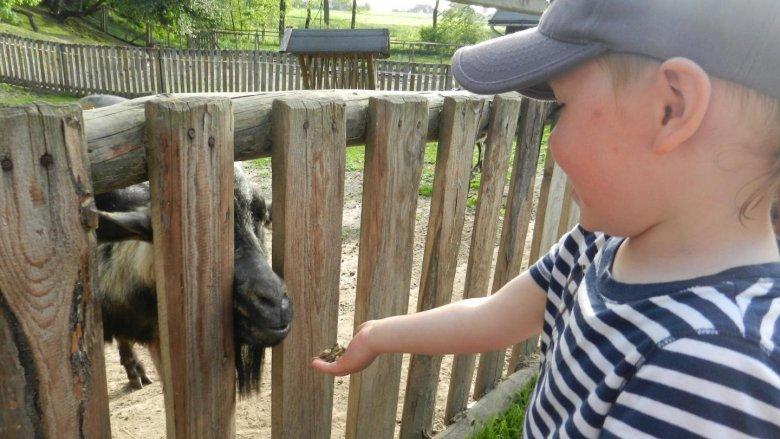 Kozy z Minizoo były bardzo towarzyskie. (fot. ola)