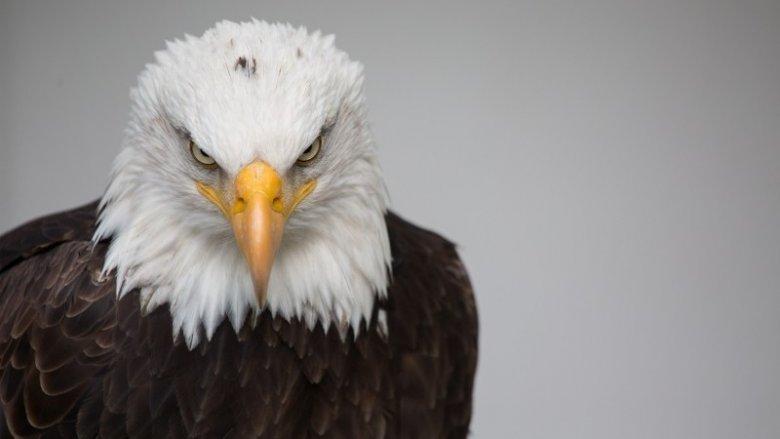 W Muzeum Górnośląskim poznacie tajemnice drapieżnych ptaków (fot. foter.com)