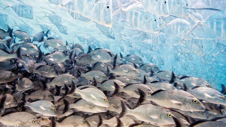 """Fotografia konkursowa Iago Leonardo z Hiszpanii """"Znikająca ryba"""""""