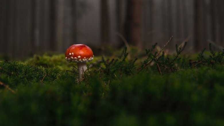 """""""Dzień Dzikiej Fauny, Flory i Siedlisk Naturalnych"""" odbędzie się 17 września (fot. pixabay)"""