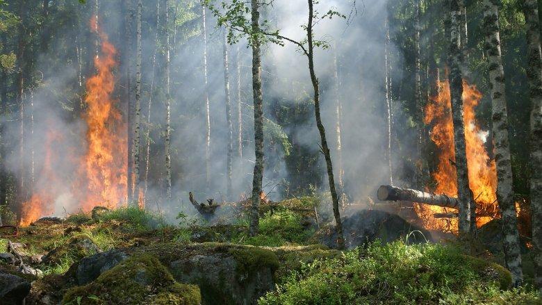 Na spotkaniu strażak opowie o pożarach lasów w Polsce, o tym, jak się zachować w sytuacji zagrożenia (fot. pixabay)
