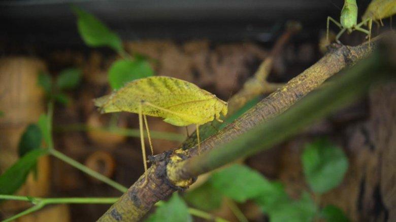 W SCC można zwiedzać wystawę egzotycznych owadów (fot. materiały SCC)