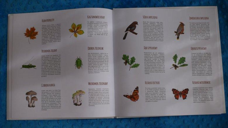 """""""Znajdź nas. Woda, łąka, las"""" to piękny album przyrodniczy od wydawnictwa Jacobsony (fot. Ewelina Zielińska)"""