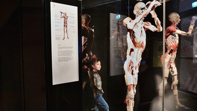 Body Worlds to wystawy, które budzą kontrowersje na całym świecie (fot. Ewelina Zielińska)