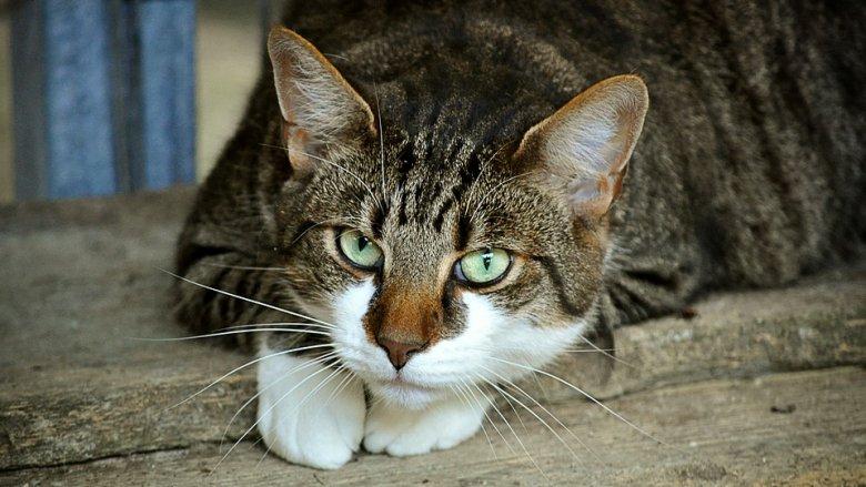 W Polsce żyje wiele bezdomnych kotów. Dobrze wiedzieć, jak można im pomóc (fot. pixabay)
