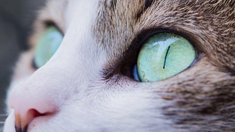 Wśród prezentowanych ras będą m.in. sfinksy, koty rosyjskie, syberyjskie i koty rasy devon rex. Niektóre z nich wyglądają, jak z innej planety (fot. pixabay)