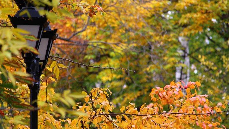 Jesienny spacer w Parku Schoena i rodzinne warsztaty to propozycja Muzeum w Sosnowcu (fot. pixabay)