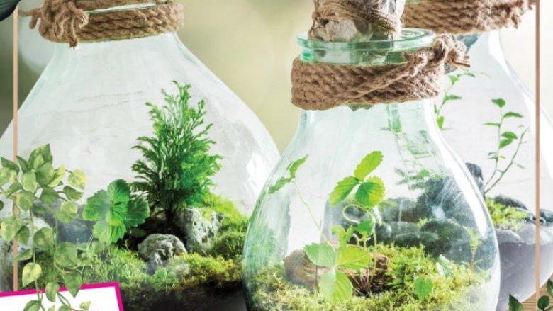 Lasy w słoikach będą niewątpliwie piękną, designerską ozdobą domów (fot. mat. organizatora)