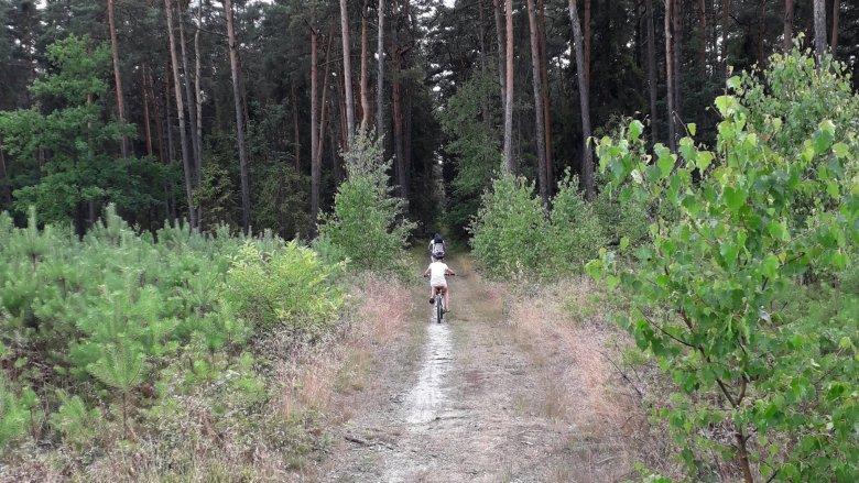 Leśno Rajza to inaczej długa przejażdżka po lesie (fot. Agnieszka Mróz/SilesiaDzieci.pl)