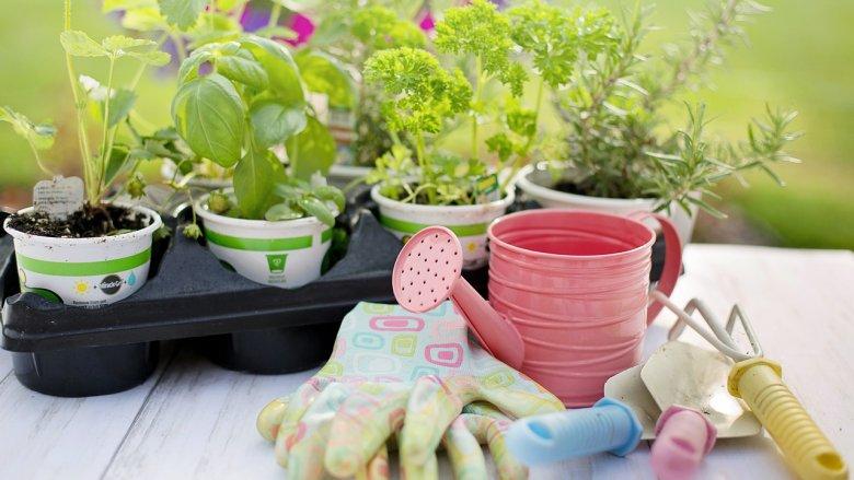 Na zajęciach dzieci nauczą się m.in. przesadzać rośliny (fot. mat. pixabay)