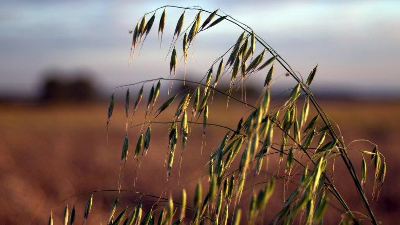 Dożynki w Ogrodzie Botanicznym w Radzionkowie odbędą się 24 września (fot.pixabay)