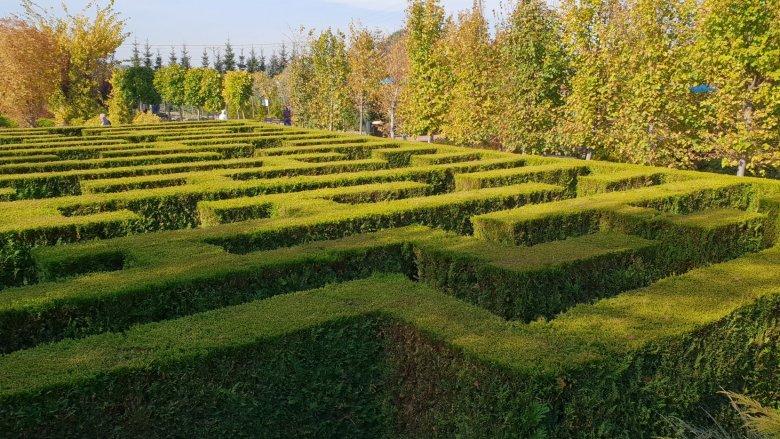 Zielony labirynt jest jedną z atrakcji Ogrodów Kapias (fot. Katarzyna Esnekier/SilesiaDzieci.pl)