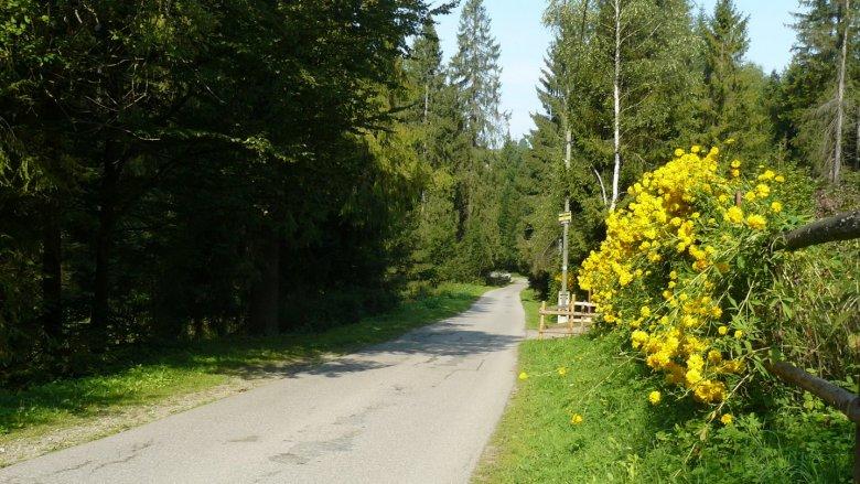 Trasa ma 2,5 km, prowadzi asfaltową drogą (fot. mat. AgnieszkaMróz/SilesiaDzieci.pl)