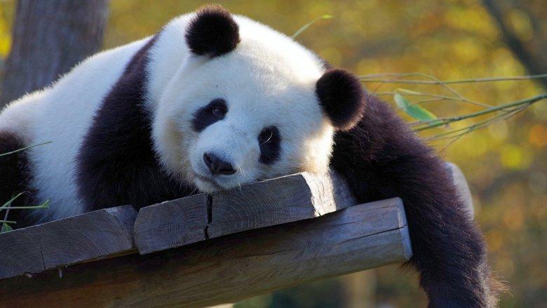 Scenariusze lekcji, komiksy, eksperymenty, filmiki edukacyjne znajdziecie a stronie WWF (fot. pixabay)