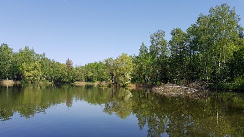W parku im. Jacka Kuronia znajdują się trzy zbiorniki wodne (fot. Katarzyna Esnekier/SilesiaDzieci.pl)
