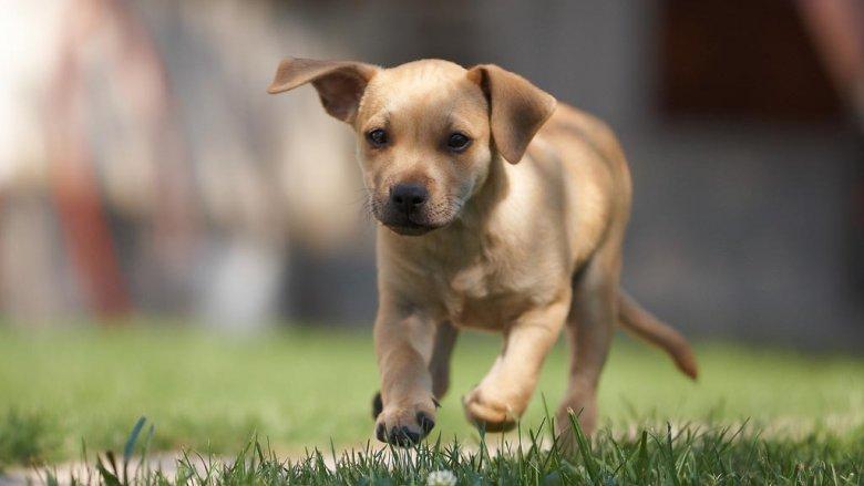 W schroniskach jest wiele zwierząt, które czekają na nowych właścicieli i ciepły dom (fot. foter.com)