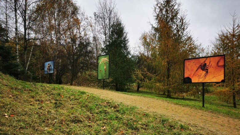 fot. mat. Śląski Ogród Botaniczny w Mikołowie