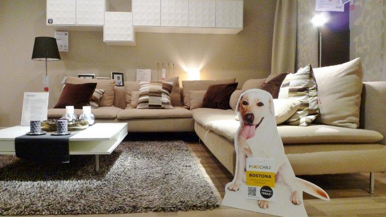 Ten psiak czeka na nowy dom (fot. materiały IKEA)