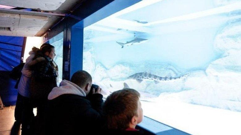 Rekiny tym razem zawitają do Będzina (fot. SOS Sea)