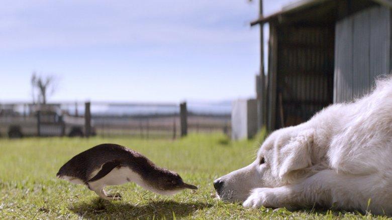 Kadr z filmu Szajbus i Pingwiny (fot. mat. Centrum Sztuki Filmowej Kino Kosmos)