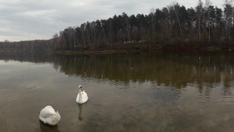 W parku znajdziemy zalew (Dolny i Górny), który powstał na terenie byłej kopalni piasku (fot. Agnieszka Mróz/SilesiaDzieci.pl)