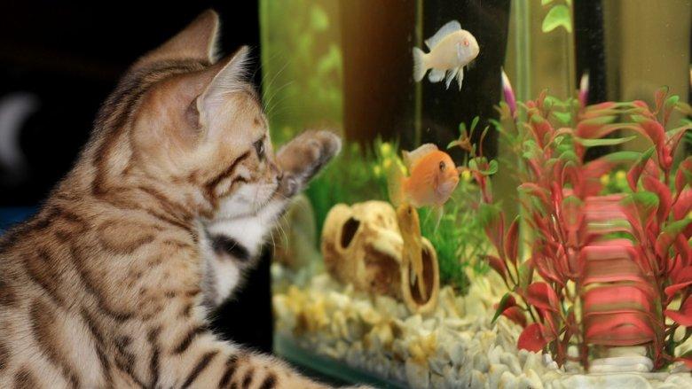 Udowodniono naukowo, że obserwacja rybek akwariowych pozytywnie wpływa na samopoczucie (fot. pixabay)