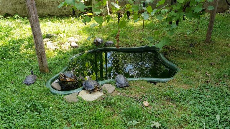 Wśród zwierząt zamieszkujących Park Zamkowy są również żółwie (fot. Katarzyna Esnekier/SilesiaDzieci.pl)