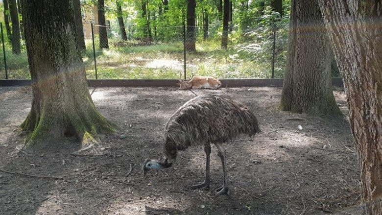 Jedną z największych atrakcji Parku Habsburgów jest minizoo (fot. Katarzyna Esnekier/SilesiaDzieci.pl)