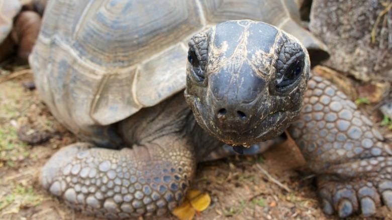 Międzynarodowy Dzień Żółwia będzie świetną okazją do odwiedzenia Śląskiego ZOO (fot. foter.com)
