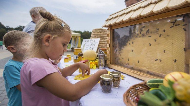 Dzieci i dorośli będą mogli zgłębić tajniki pszczelego życia (fot. mat. organizatora)