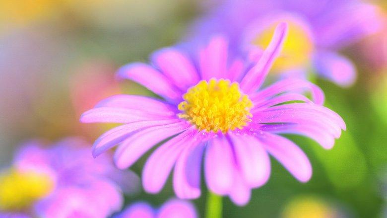 Wiosna astronomiczna rozpoczyna się w momencie równonocy wiosennej, co na półkuli północnej oznacza okres pomiędzy 20 a 22 czerwca (fot. foter.com)