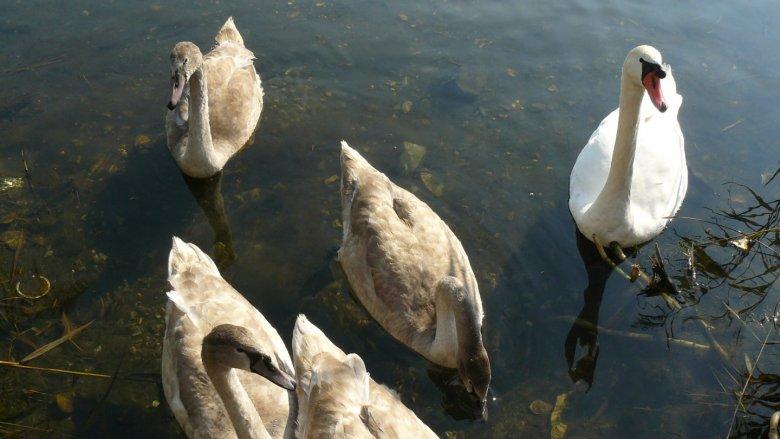 Żabie Doły to piękne miejsce, w którym można spotkać około 129 gatunków ptaków, w tym 76 gatunków lęgowych (fot. Agnieszka Mróz/SilesiaDzieci.pl)
