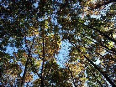 Światowy Dzień Drzewa to okazja do wzięcia udziału w wielu atrakcjach w Śląskim Ogrodzie Botanicznym (fot. FB Śląskiego Ogrodu Botanicznego)