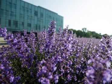 Kto dba o przestrzeń wokół Muzeum Śląskiego? (fot. mat. organizatora)