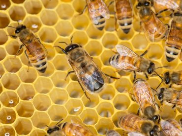 Wiele o pszczołach i innych owadach dowiecie się na zajęciach w Willi Caro (fot. foter.com)