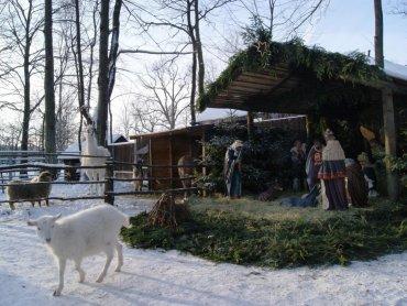 Szopkę w Zagrodzie Żubrów można odwiedzać do 8 stycznia (fot. FB Pokazowa Zagroda Żubrów w Pszczynie)