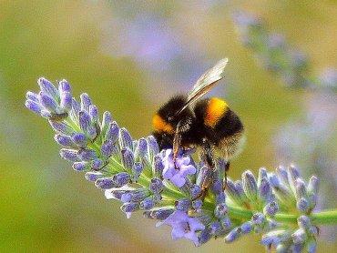 Pszczoły i inne owady będą bohaterami spotkania w gliwickim Muzeum (fot. foter.com)
