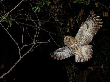 Nocne obserwacje ptaków to nie lada gratka dla wszystkich małych ornitologów (fot.mat. organizatora)