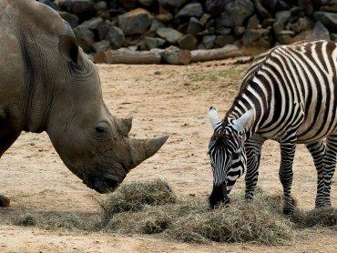 Tajemnice zwierząt poznają uczestnicy wakacyjnych zajęć w MDK Batory (fot. foter.com)