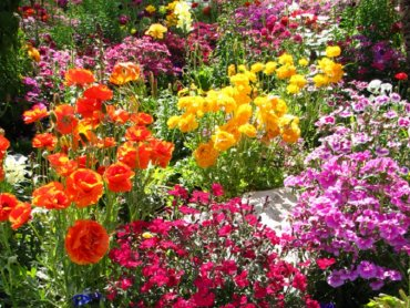 Święto Kwiatów to okazja do zakupów i zdobywania ogrodniczej wiedzy (fot. foter.com)