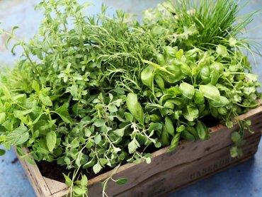 Dzień Ziół to okazja by dowiedzieć się więcej na temat ziołolecznictwa (fot. foter.com)