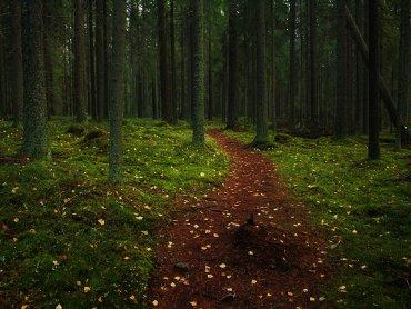 Las jest tematem ogólnopolskiego konkursu dla dzieci organizowanego przez miasto Będzin (fot. foter.com)