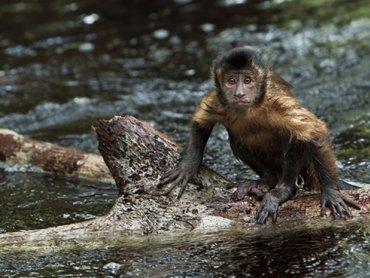 Przygody małpki na dużym ekranie (fot. materiały BECEK-u)