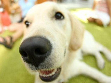 Pies jest przyjacielem człowieka. Trzeba jedna pamiętać o kilku podstawowych zasadach wspólnego funkcjonowania (fot. mat. organizatora)