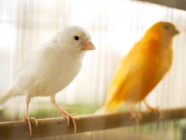 Wystawa kanarków i ptaków egzotycznych odbędzie się w dniach 11-12 listopada (fot. pixabay)