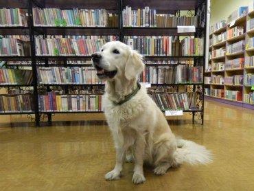 Żorska biblioteka zaprasza na nietypowe spotkanie - z psami (fot. mat. MBP Filia 5 w Żorach)