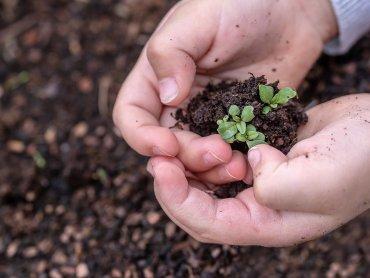"""Na zajęcia """"Dzieciaki sadzeniaki"""" obowiązują zapisy (fot. pixabay)"""