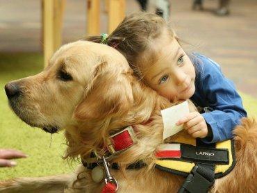 Golden Retriever o imieniu Largo z dziewczynką (fot. materiały fundacji Forget Me Not - Psia Edukacja)