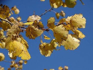 Dzień Drzewa przypada na 10 październia, jednak w ŚOB będzie obchodzony 3 dni wcześniej (fot. archiwum zdjęć na Fb/Śląski Ogród Botaniczny)