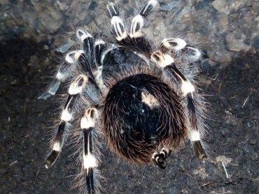 Na wystawie można będzie oglądać, a także zakupić różne gatunki pająków, płazów i ssaków (fot. mat. organizatora)
